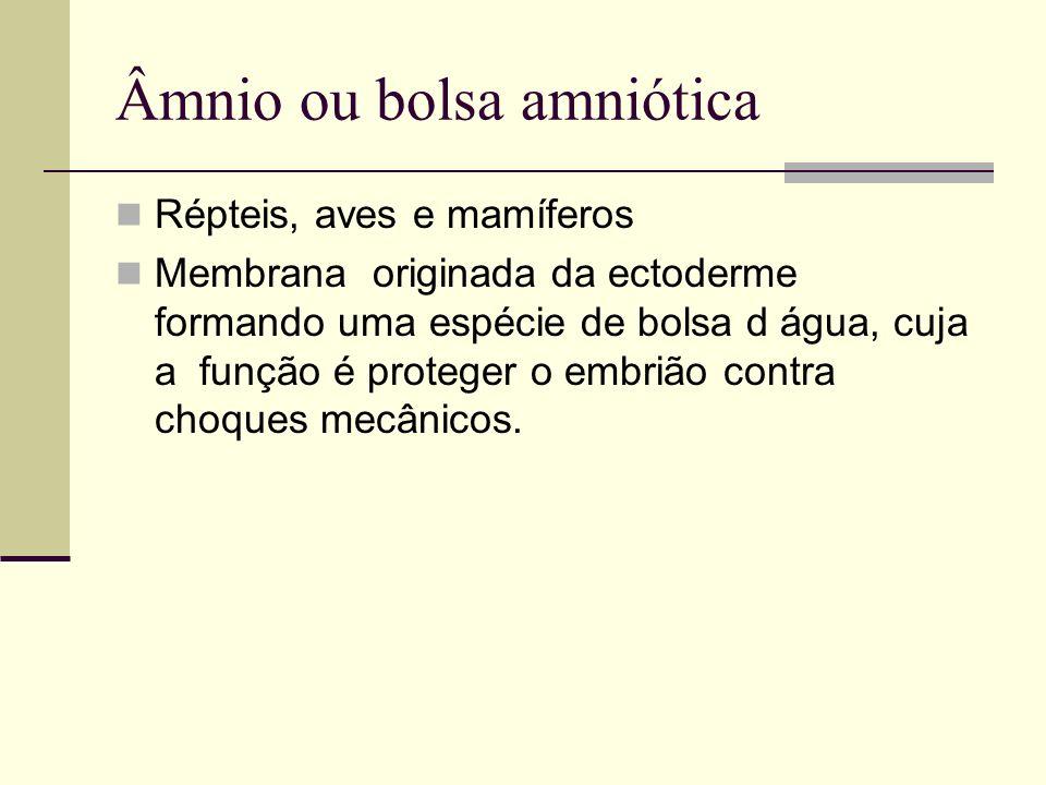 Âmnio ou bolsa amniótica Répteis, aves e mamíferos Membrana originada da ectoderme formando uma espécie de bolsa d água, cuja a função é proteger o em