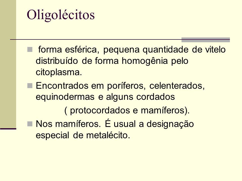 Oligolécitos forma esférica, pequena quantidade de vitelo distribuído de forma homogênia pelo citoplasma. Encontrados em poríferos, celenterados, equi