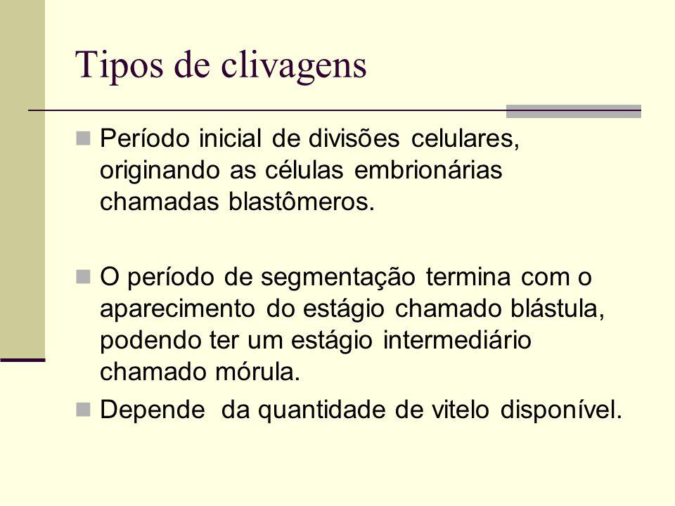 Tipos de clivagens Período inicial de divisões celulares, originando as células embrionárias chamadas blastômeros. O período de segmentação termina co