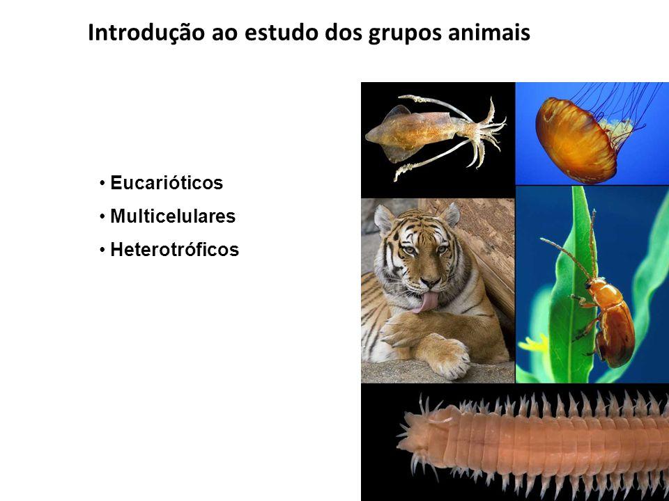 Introdução ao estudo dos grupos animais Eucarióticos Multicelulares Heterotróficos