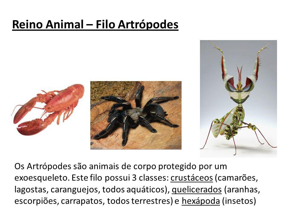 Reino Animal – Filo Artrópodes Os Artrópodes são animais de corpo protegido por um exoesqueleto. Este filo possui 3 classes: crustáceos (camarões, lag