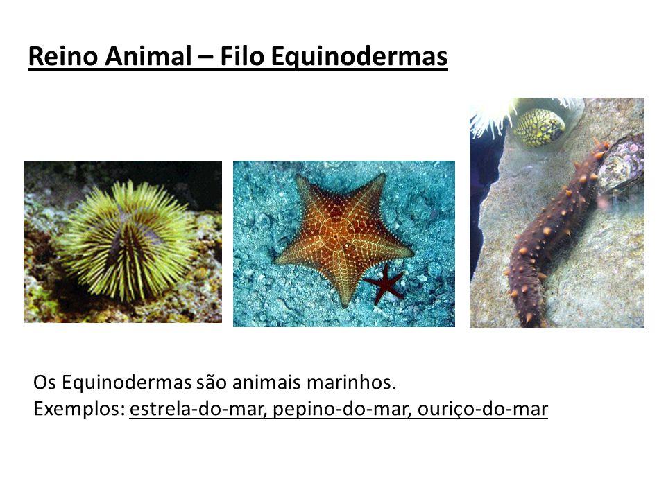 Reino Animal – Filo Equinodermas Os Equinodermas são animais marinhos. Exemplos: estrela-do-mar, pepino-do-mar, ouriço-do-mar