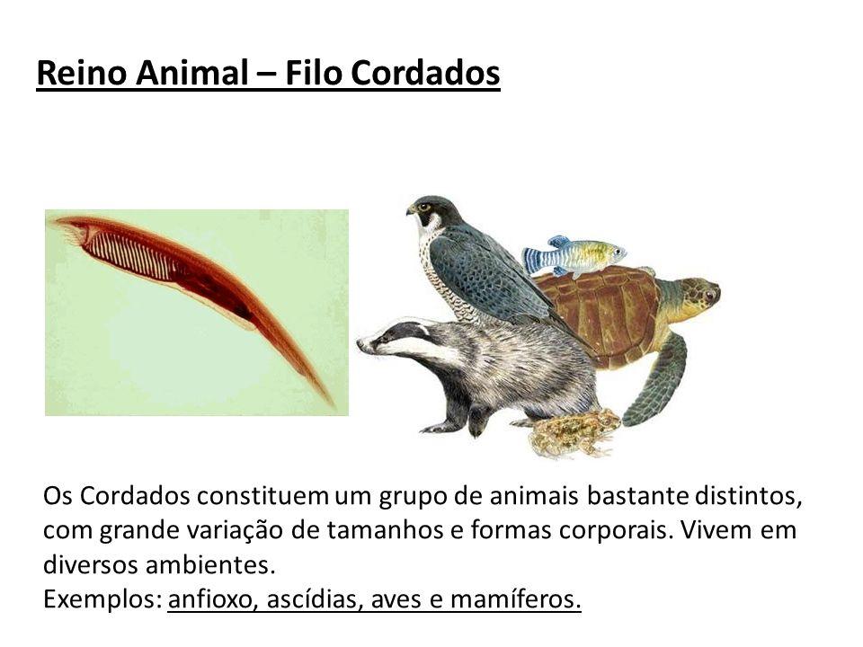 Reino Animal – Filo Cordados Os Cordados constituem um grupo de animais bastante distintos, com grande variação de tamanhos e formas corporais. Vivem
