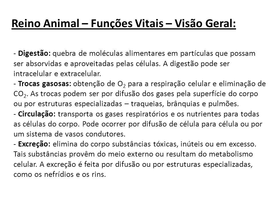 Reino Animal – Funções Vitais – Visão Geral: - Digestão: quebra de moléculas alimentares em partículas que possam ser absorvidas e aproveitadas pelas