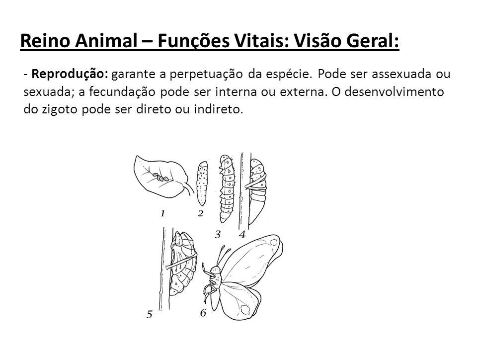 - Reprodução: garante a perpetuação da espécie. Pode ser assexuada ou sexuada; a fecundação pode ser interna ou externa. O desenvolvimento do zigoto p