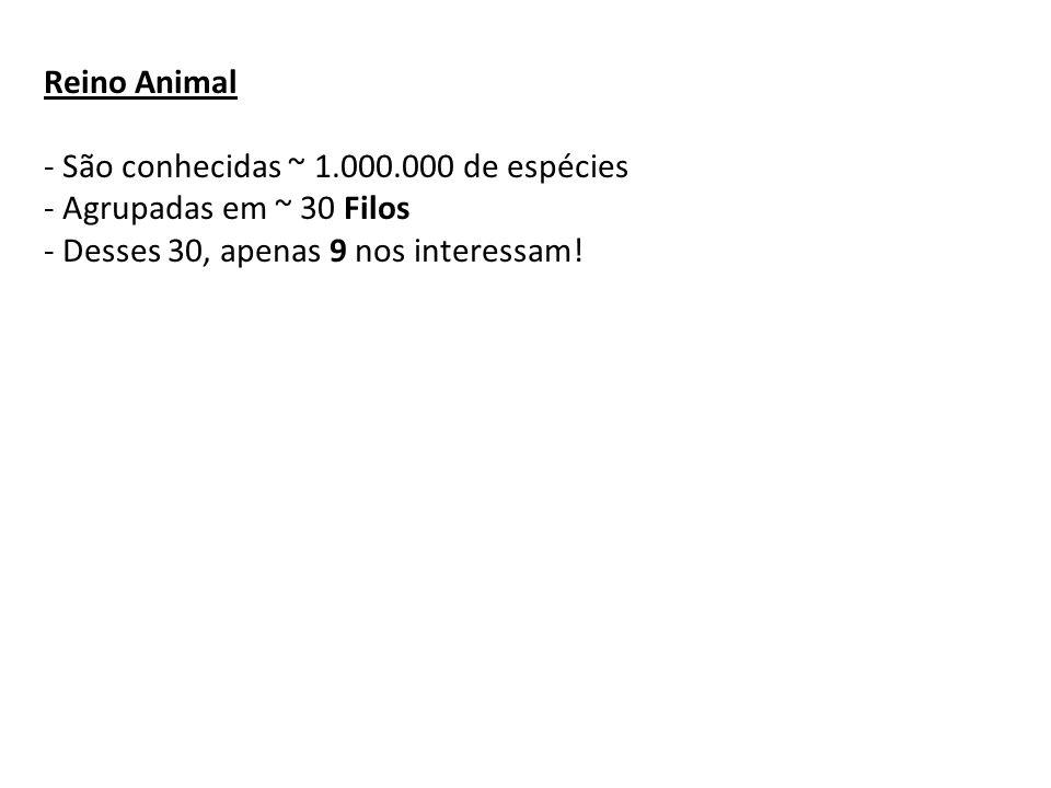 Reino Animal - São conhecidas ~ 1.000.000 de espécies - Agrupadas em ~ 30 Filos - Desses 30, apenas 9 nos interessam!