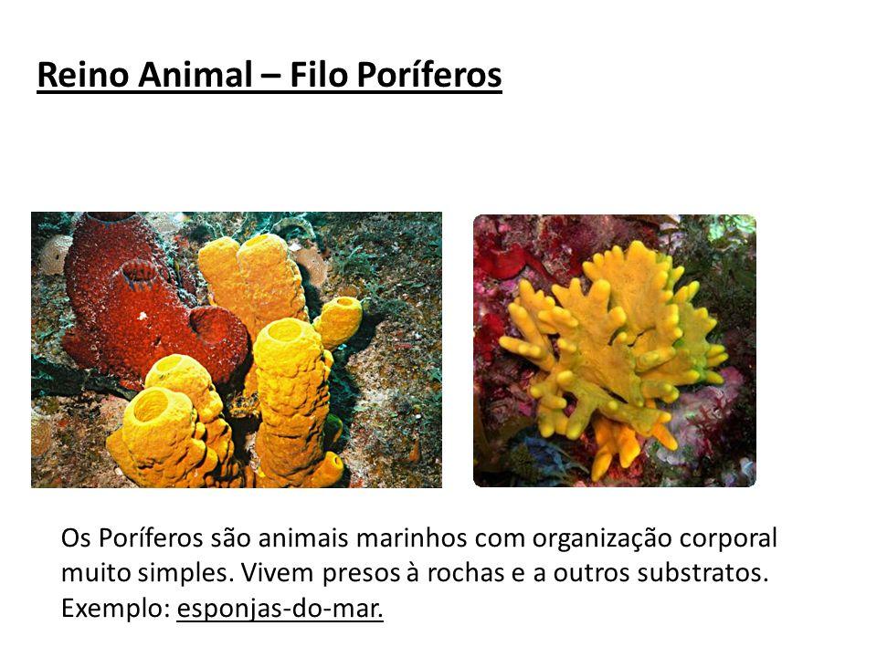 Reino Animal – Filo Poríferos Os Poríferos são animais marinhos com organização corporal muito simples. Vivem presos à rochas e a outros substratos. E