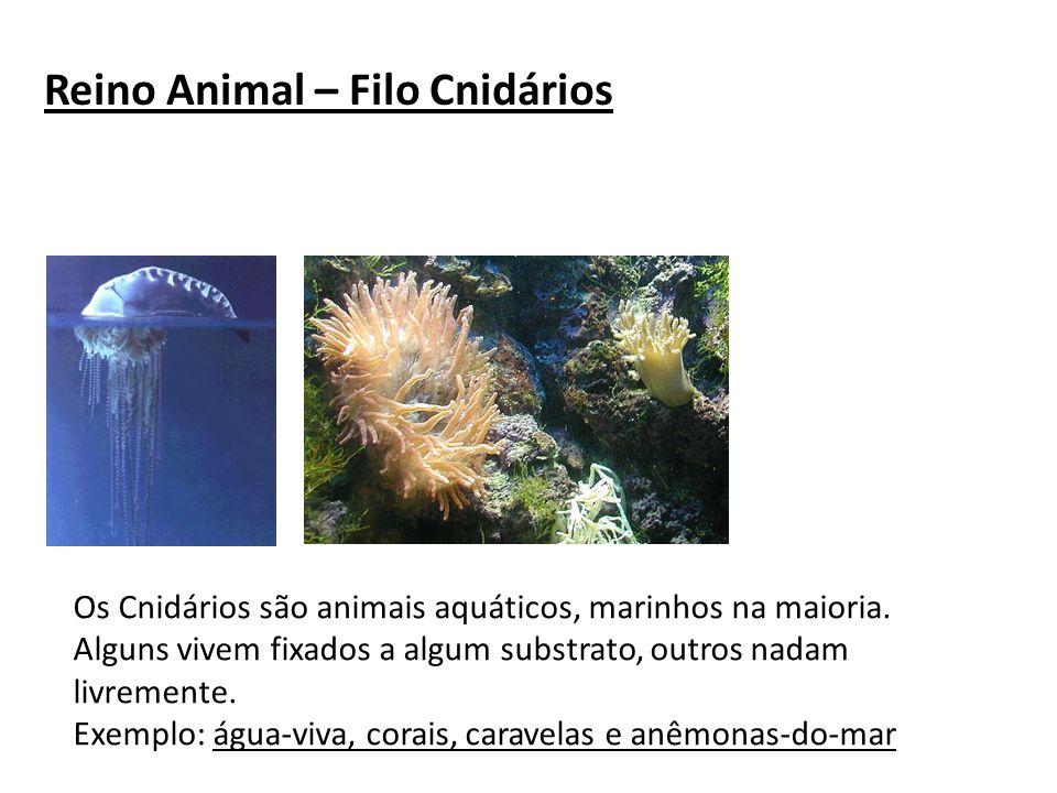 Reino Animal – Filo Cnidários Os Cnidários são animais aquáticos, marinhos na maioria. Alguns vivem fixados a algum substrato, outros nadam livremente