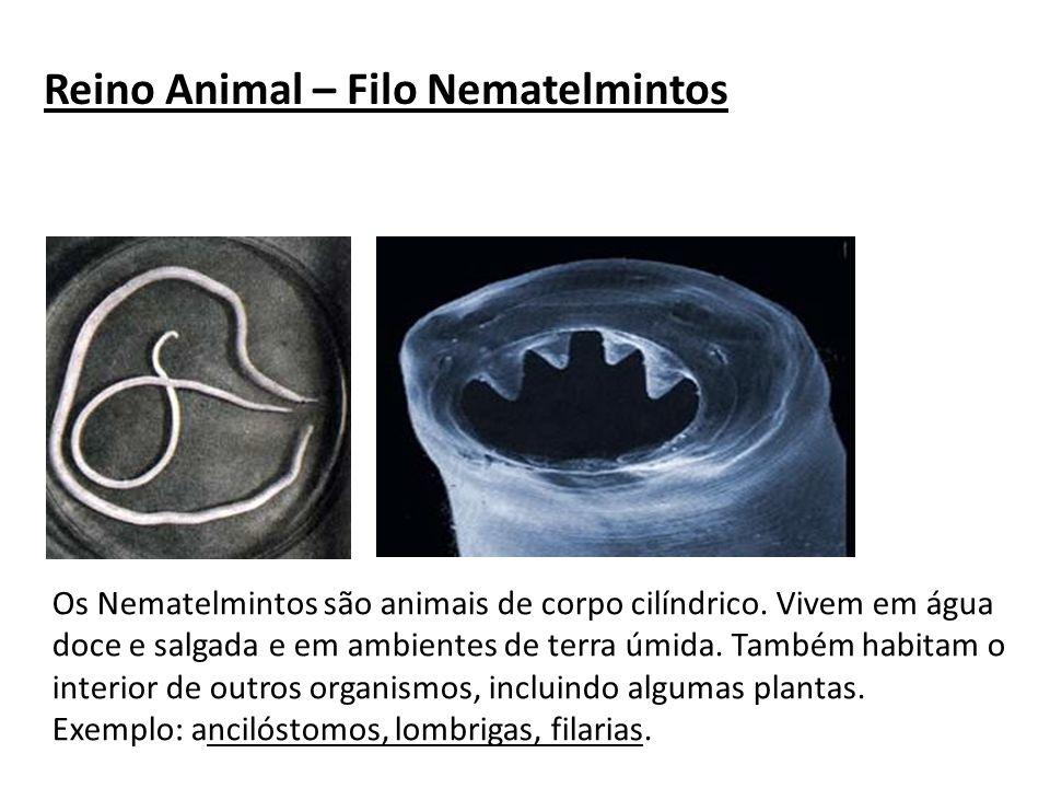 Reino Animal – Filo Nematelmintos Os Nematelmintos são animais de corpo cilíndrico. Vivem em água doce e salgada e em ambientes de terra úmida. Também