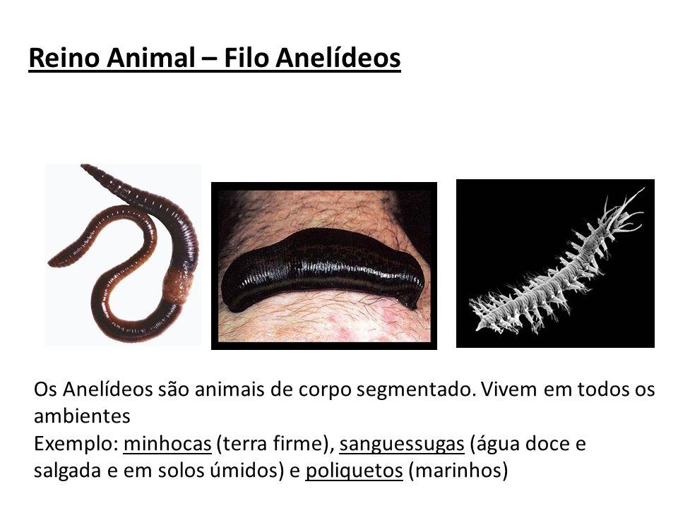 Reino Animal – Filo Anelídeos Os Anelídeos são animais de corpo segmentado. Vivem em todos os ambientes Exemplo: minhocas (terra firme), sanguessugas