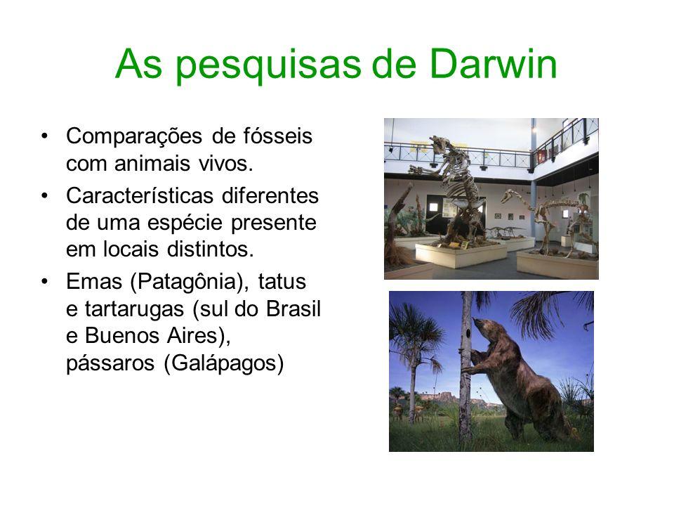 As pesquisas de Darwin Comparações de fósseis com animais vivos. Características diferentes de uma espécie presente em locais distintos. Emas (Patagôn