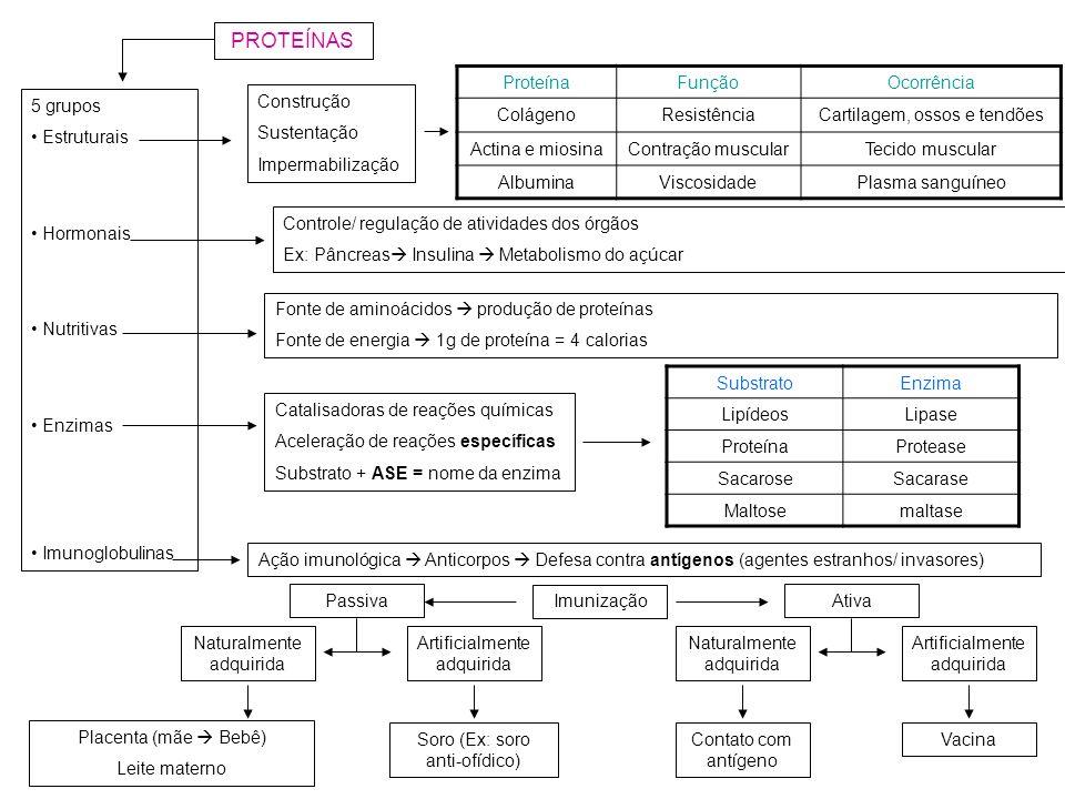 PROTEÍNAS 5 grupos Estruturais Hormonais Nutritivas Enzimas Imunoglobulinas Construção Sustentação Impermabilização ProteínaFunçãoOcorrência ColágenoR