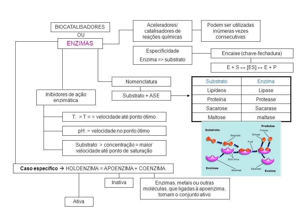 ENZIMAS BIOCATALISADORES OU Aceleradores/ catalisadores de reações químicas Podem ser utilizadas inúmeras vezes consecutivas Especificidade Enzima =>