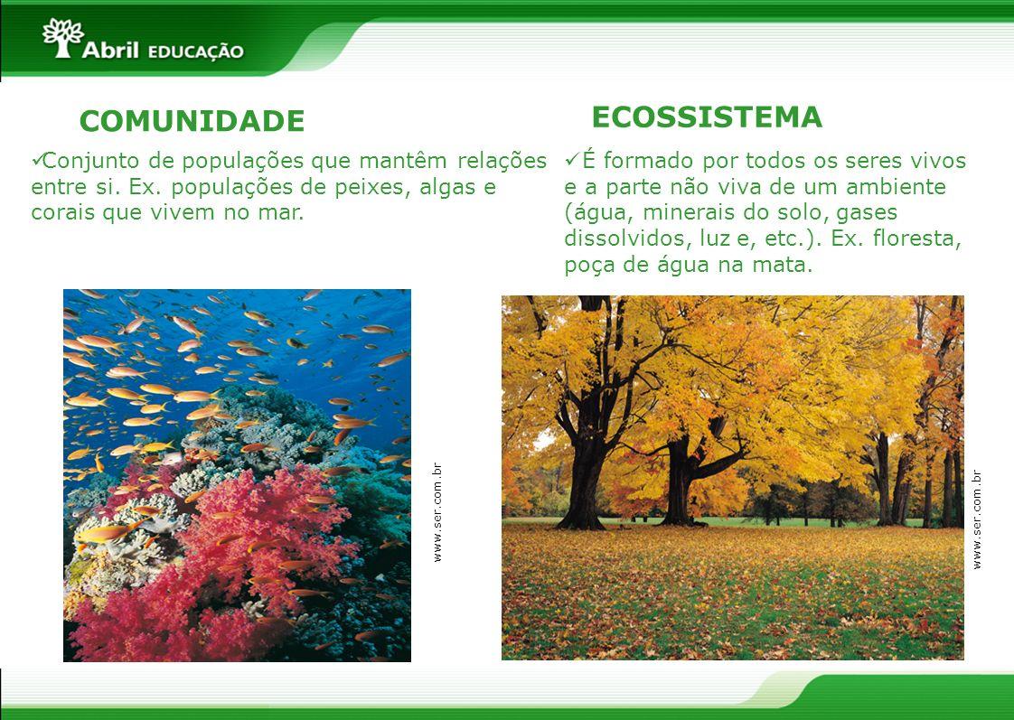 COMUNIDADE Conjunto de populações que mantêm relações entre si. Ex. populações de peixes, algas e corais que vivem no mar. É formado por todos os sere
