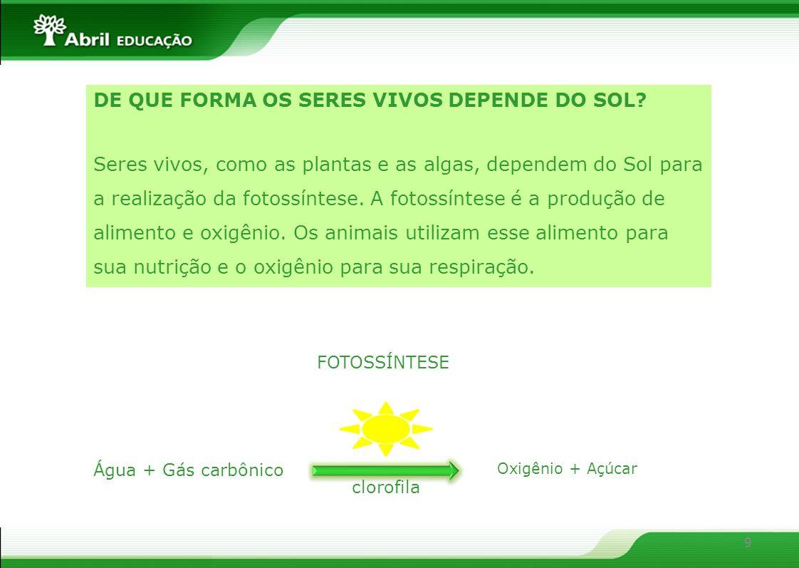 10 PLANTAS E ALGAS FUNGOS E BACTÉRIAS ANIMAIS HERBÍVOROS CARNÍVOROS SÃO CHAMADOS DE CONSUMIDORES SÃO CHAMADOS DE DECOMPOSITORES SÃO CHAMADAS DE PRODUTORES www.ser.com.br