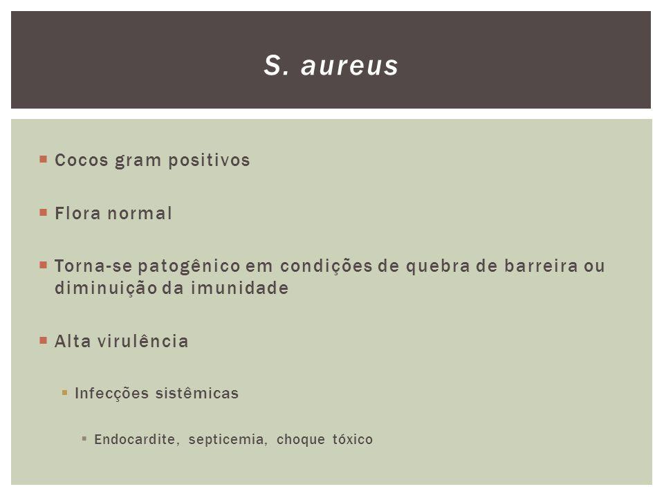 Cocos gram positivos Flora normal Torna-se patogênico em condições de quebra de barreira ou diminuição da imunidade Alta virulência Infecções sistêmic