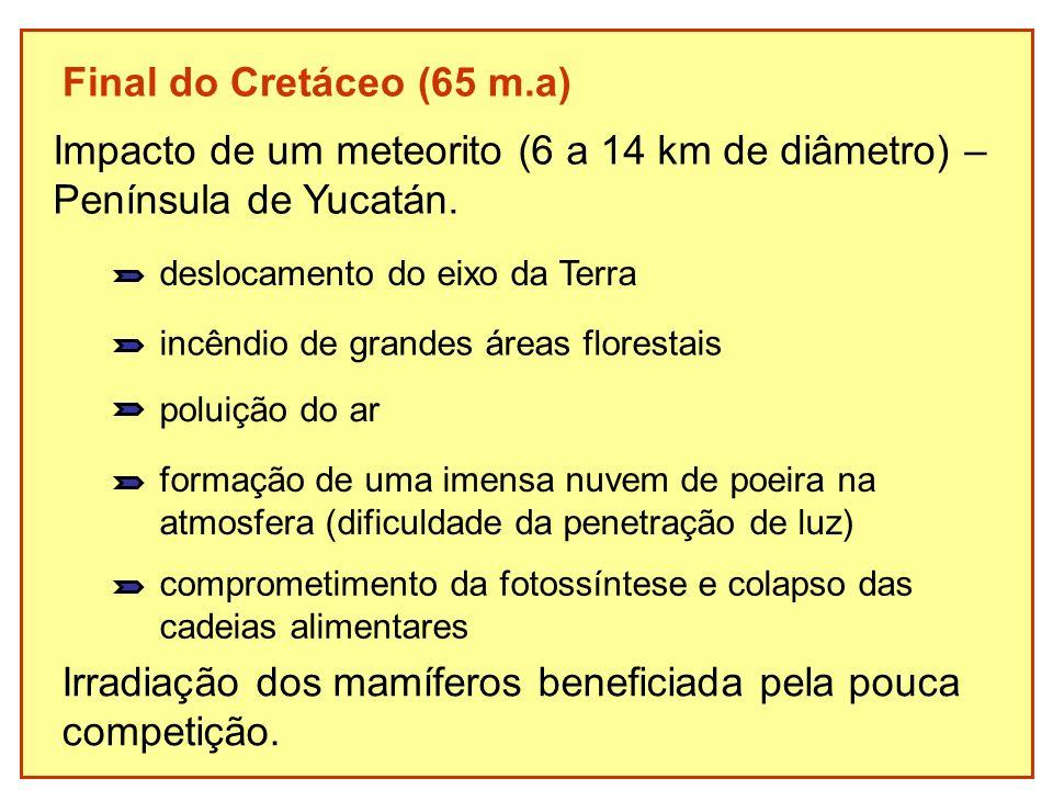 Final do Cretáceo (65 m.a) Irradiação dos mamíferos beneficiada pela pouca competição. Impacto de um meteorito (6 a 14 km de diâmetro) – Península de