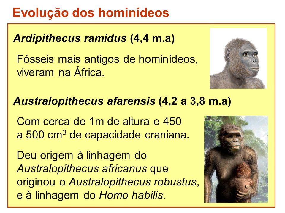 Ardipithecus ramidus (4,4 m.a) Fósseis mais antigos de hominídeos, viveram na África. Deu origem à linhagem do Australopithecus africanus que originou