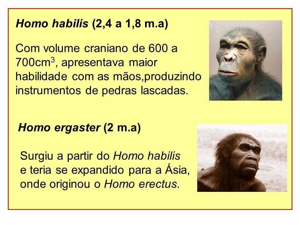 Homo habilis (2,4 a 1,8 m.a) Com volume craniano de 600 a 700cm 3, apresentava maior habilidade com as mãos,produzindo instrumentos de pedras lascadas