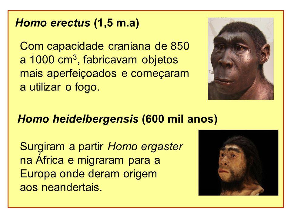Homo erectus (1,5 m.a) Com capacidade craniana de 850 a 1000 cm 3, fabricavam objetos mais aperfeiçoados e começaram a utilizar o fogo. Homo heidelber