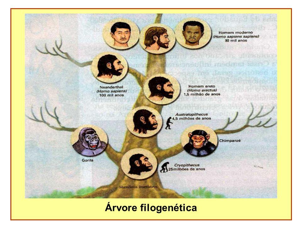 Árvore filogenética