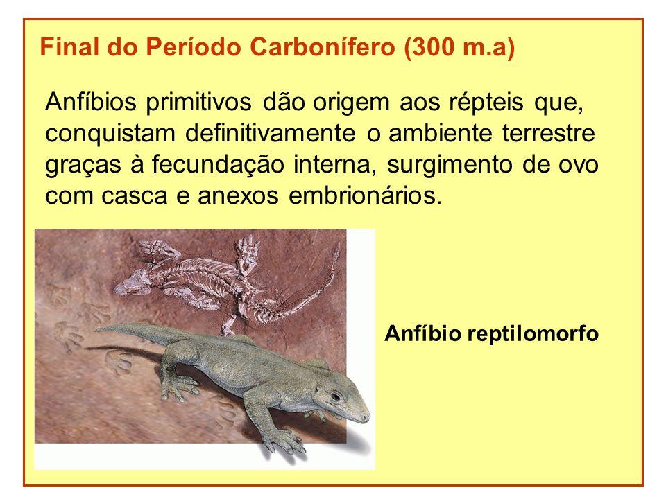 Final do Período Carbonífero (300 m.a) Anfíbios primitivos dão origem aos répteis que, conquistam definitivamente o ambiente terrestre graças à fecund