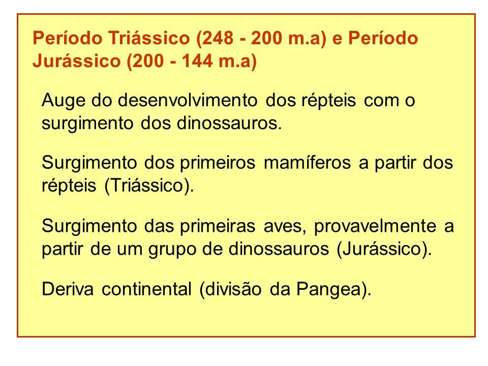 Período Triássico (248 - 200 m.a) e Período Jurássico (200 - 144 m.a) Auge do desenvolvimento dos répteis com o surgimento dos dinossauros. Surgimento