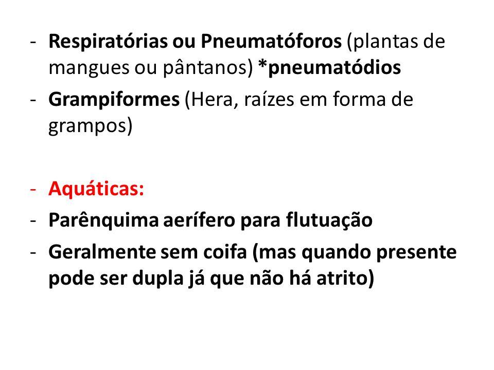 -Respiratórias ou Pneumatóforos (plantas de mangues ou pântanos) *pneumatódios -Grampiformes (Hera, raízes em forma de grampos) -Aquáticas: -Parênquim