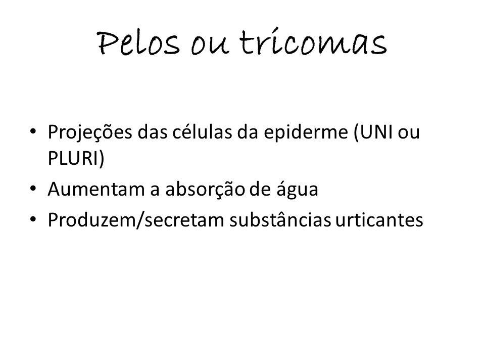 Pelos ou tricomas Projeções das células da epiderme (UNI ou PLURI) Aumentam a absorção de água Produzem/secretam substâncias urticantes