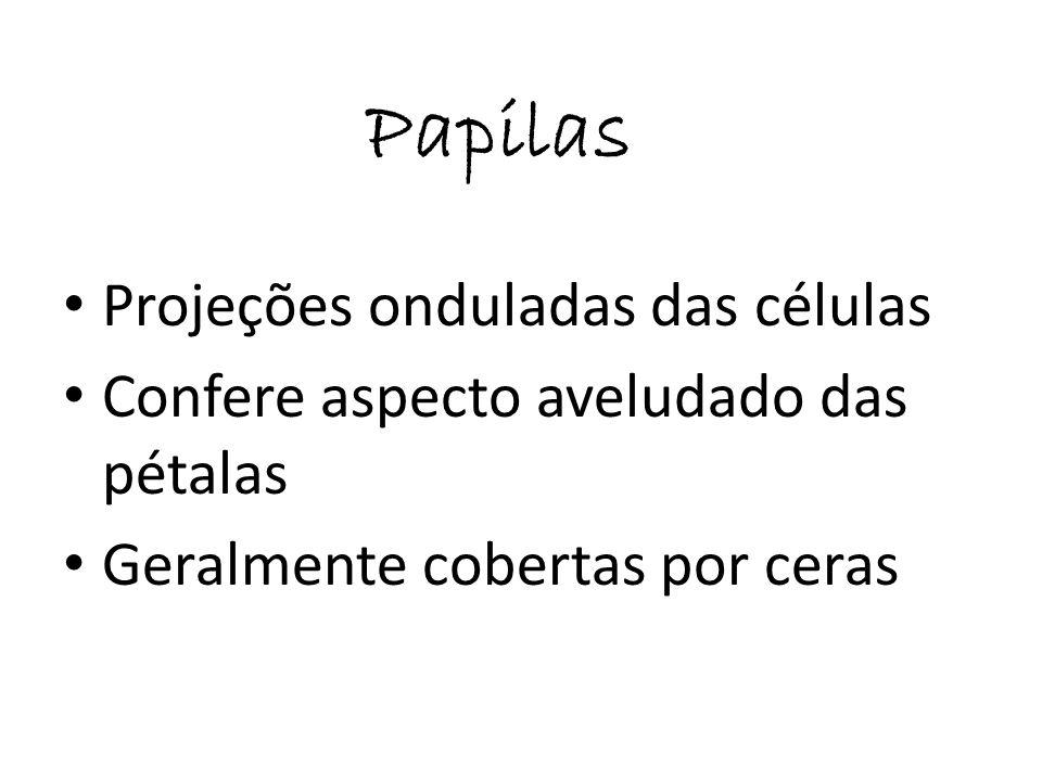 Acúleos Projeções pontiagudas Pluricelulares e rígidas Acúleos espinhos