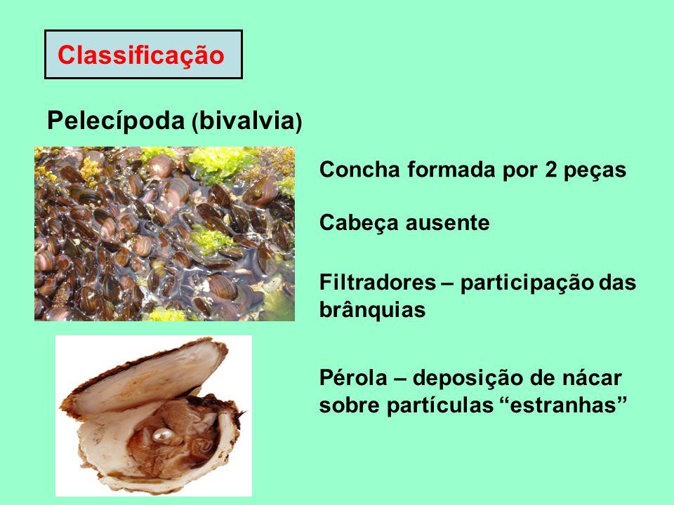 Classificação Pelecípoda ( bivalvia ) Concha formada por 2 peças Cabeça ausente Filtradores – participação das brânquias Pérola – deposição de nácar s