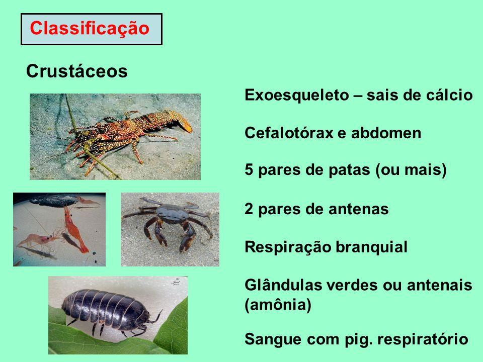 Classificação Crustáceos Exoesqueleto – sais de cálcio Cefalotórax e abdomen 5 pares de patas (ou mais) 2 pares de antenas Respiração branquial Glându