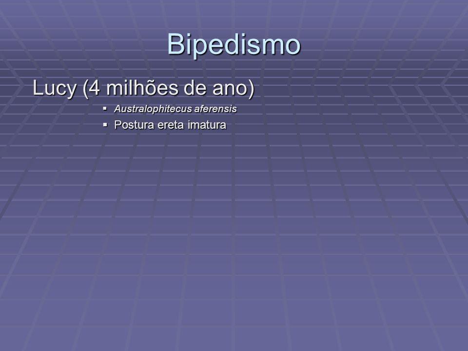 Bipedismo Lucy (4 milhões de ano) Australophitecus aferensis Australophitecus aferensis Postura ereta imatura Postura ereta imatura