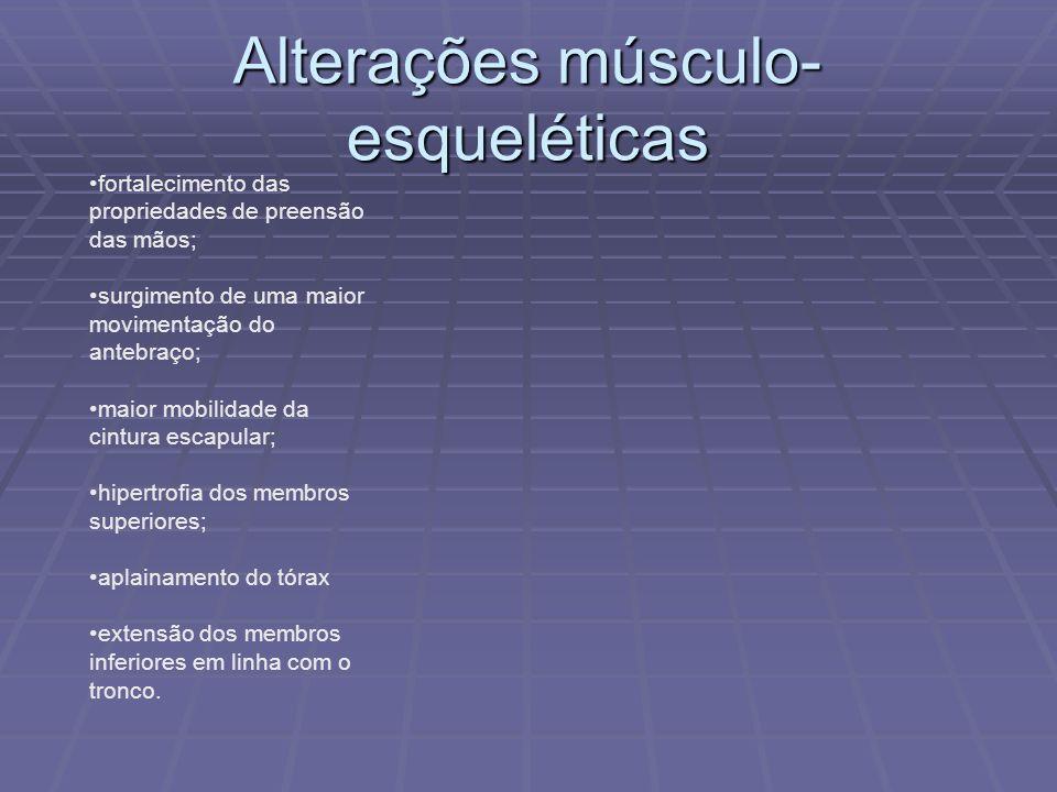 Alterações músculo- esqueléticas fortalecimento das propriedades de preensão das mãos; surgimento de uma maior movimentação do antebraço; maior mobili