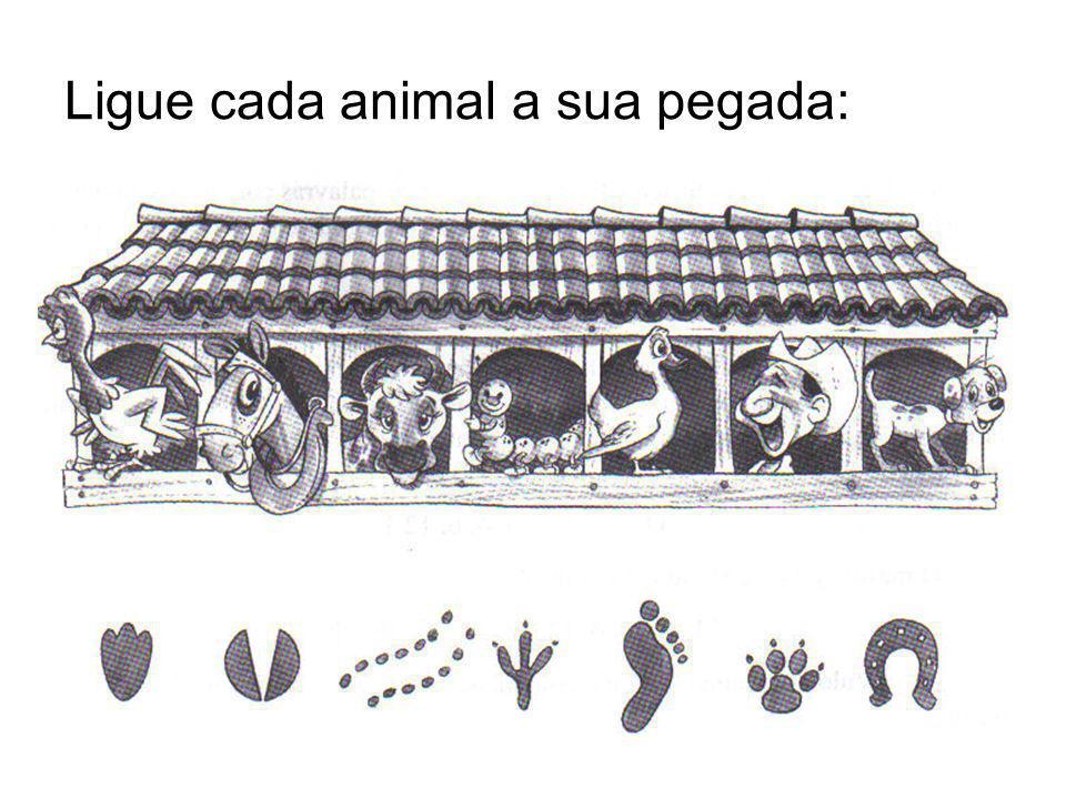 Ligue cada animal a sua pegada: