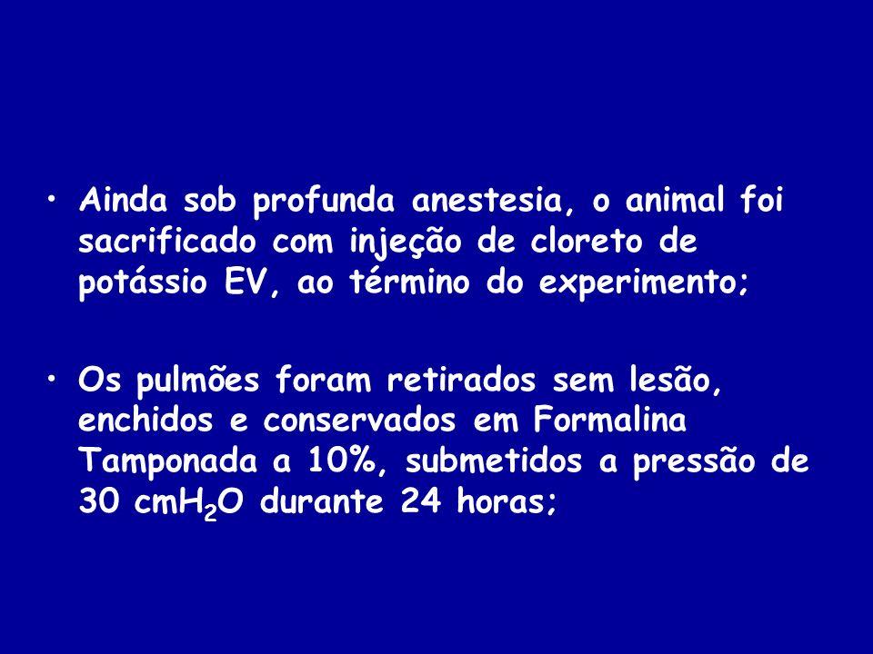 Ainda sob profunda anestesia, o animal foi sacrificado com injeção de cloreto de potássio EV, ao término do experimento; Os pulmões foram retirados se