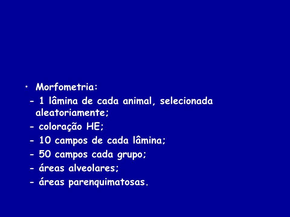 Morfometria: - 1 lâmina de cada animal, selecionada aleatoriamente; - coloração HE; - 10 campos de cada lâmina; - 50 campos cada grupo; - áreas alveol