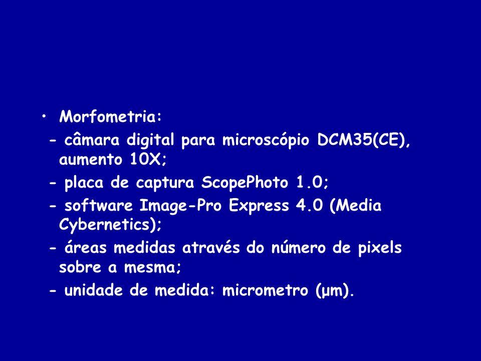 Morfometria: - câmara digital para microscópio DCM35(CE), aumento 10X; - placa de captura ScopePhoto 1.0; - software Image-Pro Express 4.0 (Media Cybe