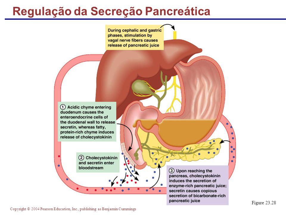 Copyright © 2004 Pearson Education, Inc., publishing as Benjamin Cummings Mesentérios dos Órgãos Digestivos Figure 23.30b