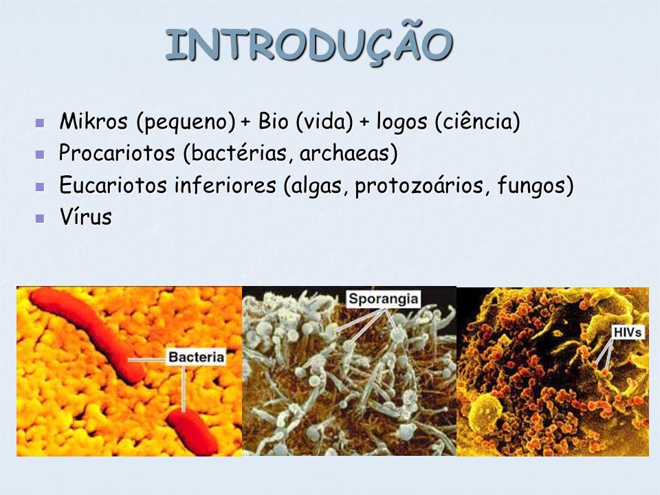INTRODUÇÃO Mikros (pequeno) + Bio (vida) + logos (ciência) Mikros (pequeno) + Bio (vida) + logos (ciência) Procariotos (bactérias, archaeas) Procariot