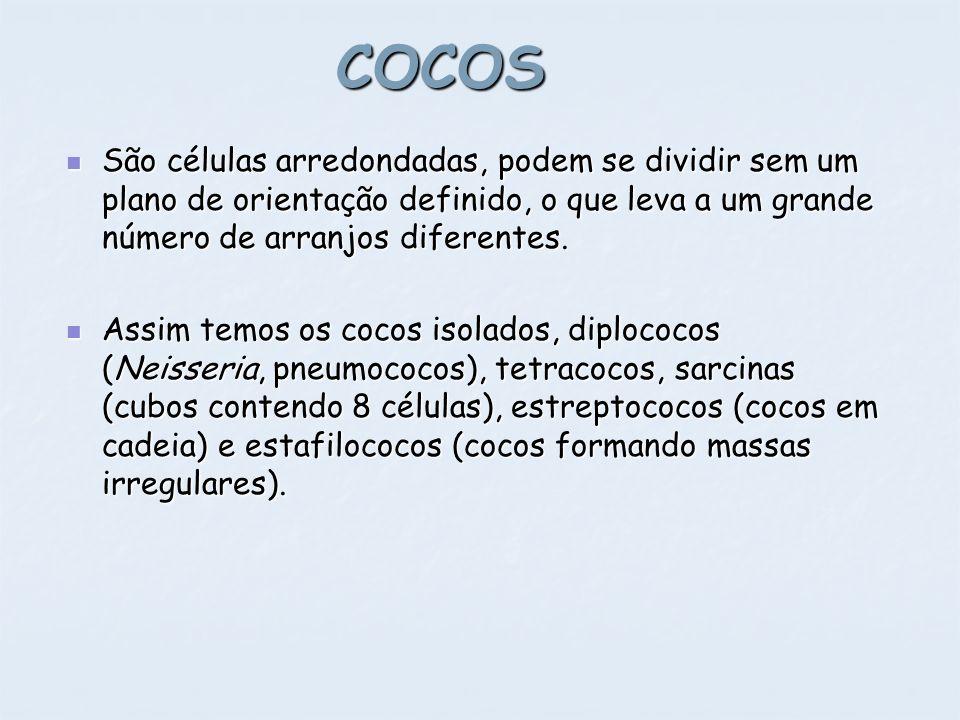 COCOS São células arredondadas, podem se dividir sem um plano de orientação definido, o que leva a um grande número de arranjos diferentes. São célula