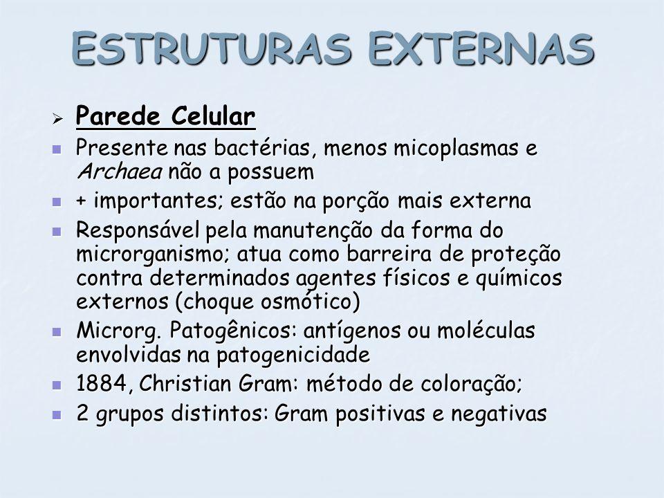 ESTRUTURAS EXTERNAS Parede Celular Parede Celular Presente nas bactérias, menos micoplasmas e Archaea não a possuem Presente nas bactérias, menos mico