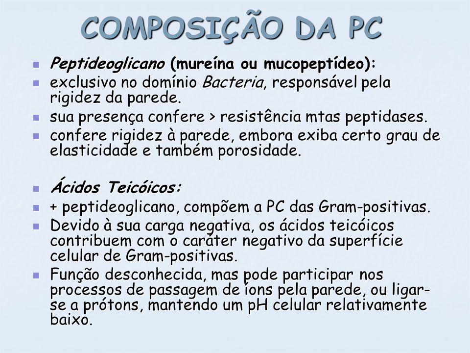 COMPOSIÇÃO DA PC Peptideoglicano (mureína ou mucopeptídeo): Peptideoglicano (mureína ou mucopeptídeo): exclusivo no domínio Bacteria, responsável pela
