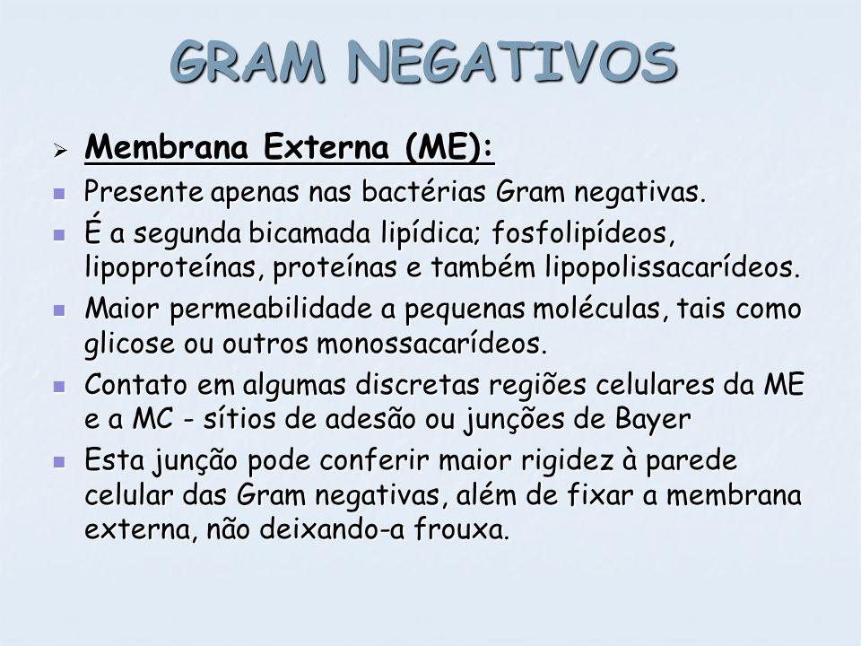 GRAM NEGATIVOS Membrana Externa (ME): Membrana Externa (ME): Presente apenas nas bactérias Gram negativas. Presente apenas nas bactérias Gram negativa