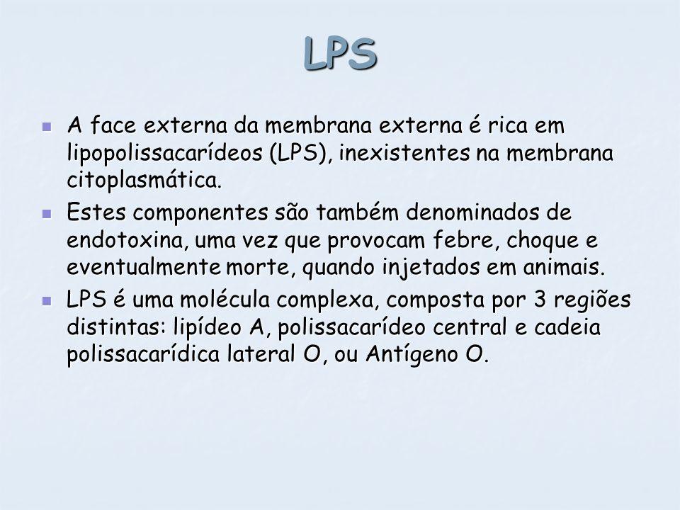 LPS A face externa da membrana externa é rica em lipopolissacarídeos (LPS), inexistentes na membrana citoplasmática. A face externa da membrana extern