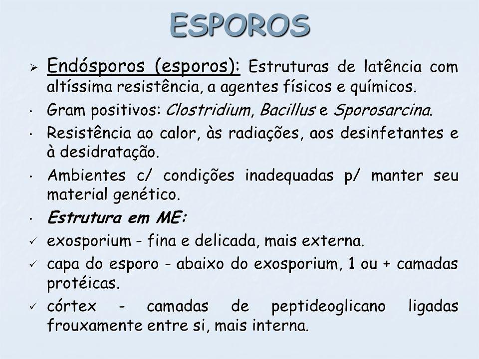 ESPOROS Endósporos (esporos): Estruturas de latência com altíssima resistência, a agentes físicos e químicos. Endósporos (esporos): Estruturas de latê