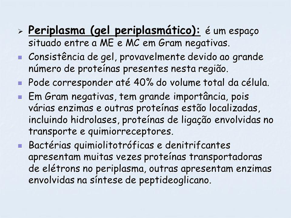 Periplasma (gel periplasmático): é um espaço situado entre a ME e MC em Gram negativas. Periplasma (gel periplasmático): é um espaço situado entre a M
