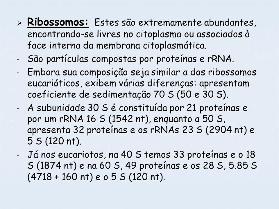 Ribossomos: Estes são extremamente abundantes, encontrando-se livres no citoplasma ou associados à face interna da membrana citoplasmática. Ribossomos