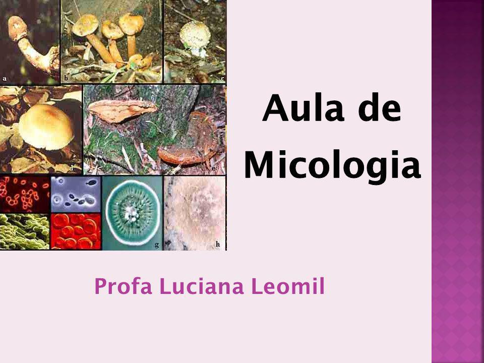 Introdução Os fungos são um grupo de organismos eucariotas não-móveis com parede celular definida, sem clorofila, que se reproduzem através de esporos (Kwong-Chung e Bennett) Possui tamanho reduzido e uma menor quantidade de DNA; Nucléolo; Organelas Citoplasmáticas (ribossomos, mitocôndrias, retículo endoplasmático, aparelho de golgi e vacúolos)