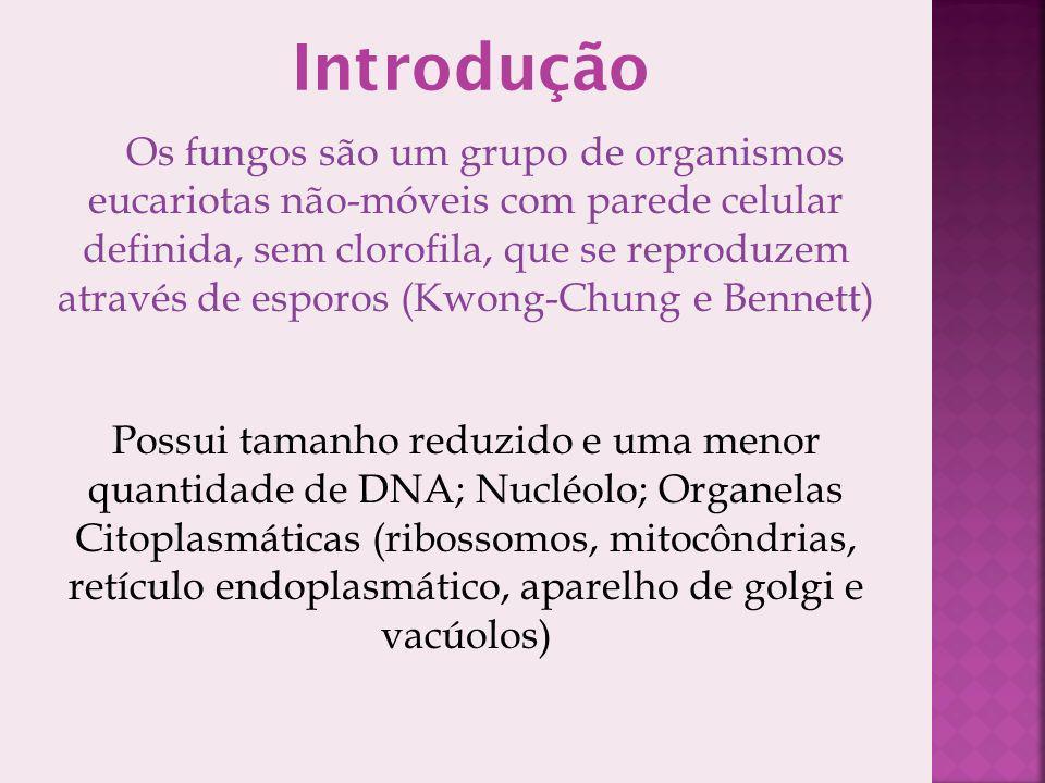 Introdução Os fungos são um grupo de organismos eucariotas não-móveis com parede celular definida, sem clorofila, que se reproduzem através de esporos
